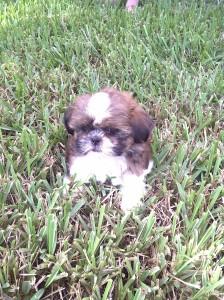 flip flop in the grass