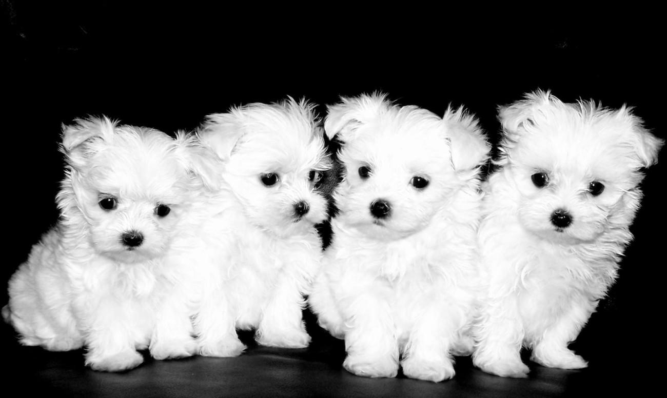 Training Little Dogs
