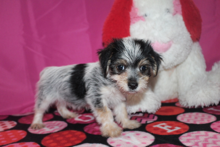 Puppy love sc 4