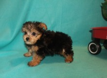 2-biscuit-1-7lbs-8-wks-6