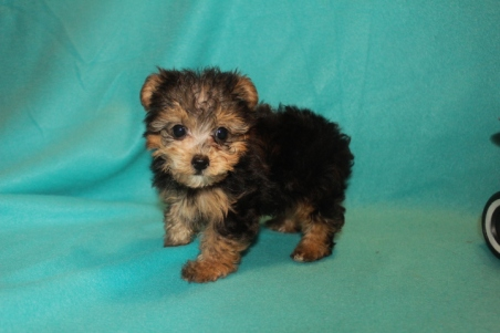4-biscuit-1-7lbs-8-wks-8
