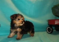 6-biscuit-1-7lbs-8-wks-18