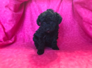 1 Lacey 1.4lb 6wk (8)