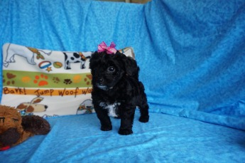 4 Gentle Peppermint Patty 2.7 lbs 7 Weeks old 016
