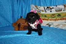 4 Gentle Sally 1.7 lbs 7 Weeks old 038