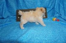 5 Annie 1.10 lbs 7W1D Old (14)