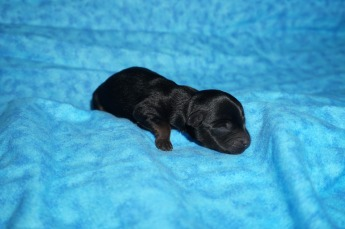 3 Reeses 5.3 oz 1 day old (4)