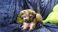 2 Kipi (Gibby) 2.15lb 7 Weeks old (34)