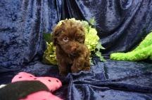 3 Tipi (Coco) 1.12 lb 7 Weeks old (10)