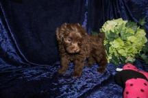 4 Tipi (Coco) 1.12 lb 7 Weeks old (43)