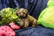 5 Kipi (Gibby) 2.15lb 7 Weeks old (31)