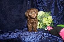 5 Tipi (Coco) 1.12 lb 7 Weeks old (22)