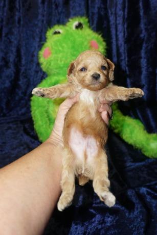 6 Roo 14 oz 3 Weeks old (1)