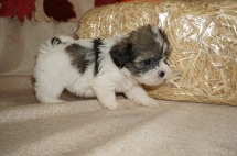 4 Tilly (Sadie) 1.12 lbs 6W1D Old (47)