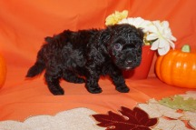6 Licorice 2.4lbs 5wk4d old (9)