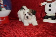 3 Buster 2.14 lbs 7 wks old (38)