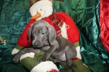 Jingle Bells 8 weeks old (18)
