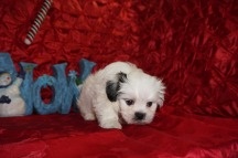 4 Frosty 2.3 lbs 7 wks old (2)