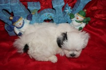 5 Frosty 2.3 lbs 7 wks old (30)