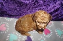 3 Jethro 1.9 lbs 6 weeks old (19)