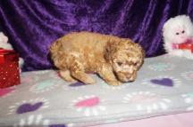 4 Jethro 1.9 lbs 6 weeks old (24)