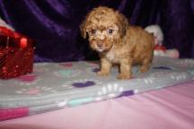 5 Jethro 1.9 lbs 6 weeks old (1)