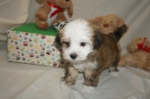 5 Spanky 2lbs 6wk2d old (10)