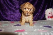 6 Jethro 1.9 lbs 6 weeks old (21)