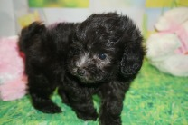 3 Scamp (Jackson) 1 lb 5oz 6 wks old (20)