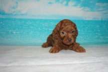 5 Candy 1.15lb 5weeks old (26)
