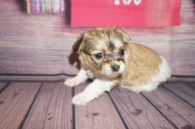Mustang Sally Female Miki $2000 Ready 6/21 AVAILABLE 1.1lbs 4 weeks old