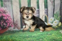 6 Twinkle 1.11 lbs 6 weeks old (7)
