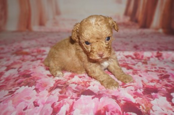 3 Big Red 14.2 oz 3W5D Old (4)