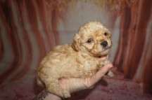 3 Orbit 1 lb 3W5D Old (5)
