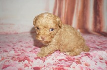 4 Big Red 14.2 oz 3W5D Old (5)