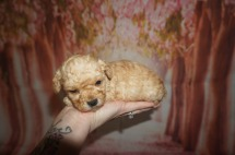 4 Orbit 1 lb 3W5D Old (1)