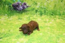 3 Jumba 4.4oz 1 day old (48)