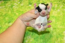 6 Celia 6oz Just born (24)