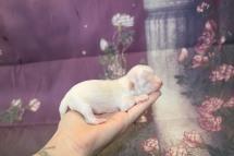 3 Bambino 5.1oz 5 days old (6)