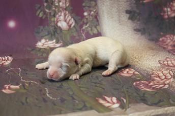 4 Casanova 5.6oz 5 days old (9)
