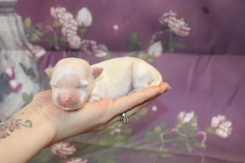 4 Dreamy 6.7oz 5 days old (7)