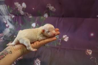 Bambino 5.1oz 5 days old (1)