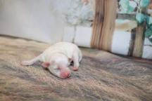 4 Gigi 5.1oz 1 day old (14)