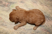 5 Star 11oz 7 days old (9)