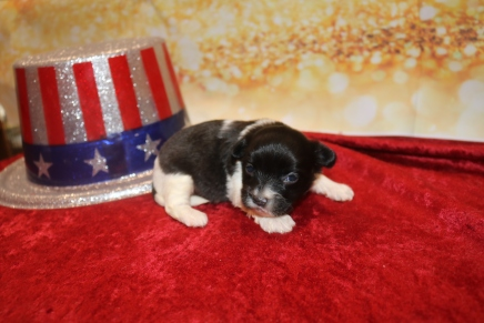 Snuggles Male Miki $2000 Ready Feb 6 AVAILABLE 13 oz 2W3D Old