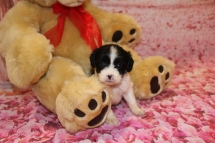 Hugs Male Miki $2000 Ready Feb 6 AVAILABLE 1lb 4 oz 4W4D Old