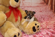 Heart Male Miki $2000 Ready Feb 6 AVAILABLE 1lb 2 oz 4W4D Old