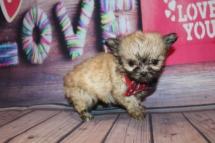 Cutie Male Miki $2000 Ready Feb 4 HAS HOLD 14.5 oz 7 W 2 days Old