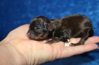 4 Chewbacca 3.5 oz 1 Day old (7)