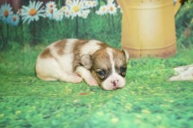 1 Penny 13.2oz 3 weeks old (16)